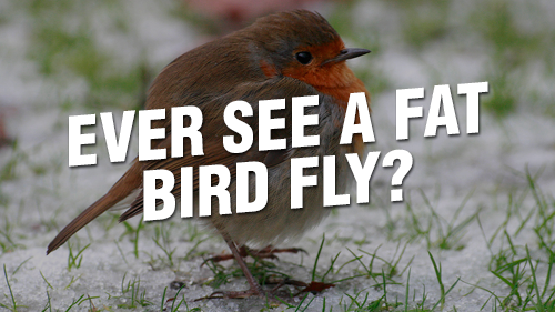 Ever See a Fat Bird Fly?